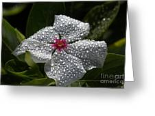 Natures Glitter Greeting Card