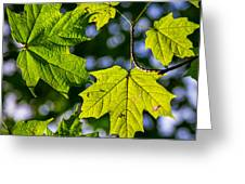 Natures Going Green Design Greeting Card
