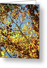 Natures Gold Greeting Card