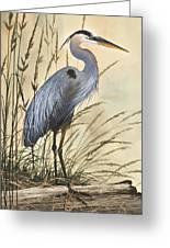 Nature's Harmony Greeting Card