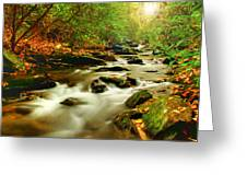Natures Journey Greeting Card by Darren Fisher