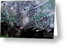 Nature's Lace Greeting Card