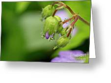 Nature's Little Wonders Greeting Card