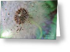 Natures New Life 1 Greeting Card