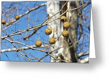 Nature's Ornaments Greeting Card