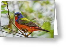 Nature's Palette Greeting Card