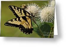 Natures Pin Cushion Greeting Card