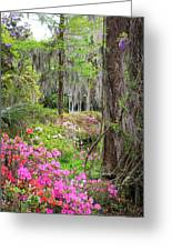 Natures Scenery  Greeting Card