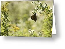 Natures Simplicity Greeting Card