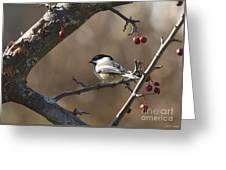 Natures Small Wonders Greeting Card