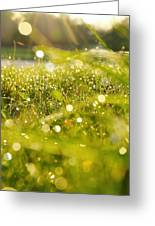 Nature's Sparkles Greeting Card
