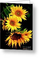 Natures Sunflower Bouquet Greeting Card