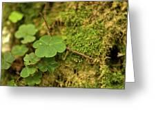 Natures Tiny Work Greeting Card