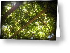 Nature's Upward View Greeting Card
