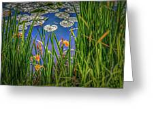 Nature's Window #h5 Greeting Card by Leif Sohlman