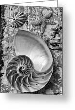 Nautilus Shell With Starfish Greeting Card