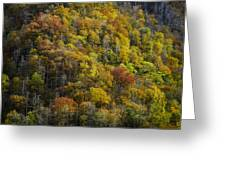 Nc Fall Foliage 0559 Greeting Card
