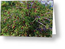 Nc Mountain Apples II Greeting Card