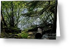 Near Water Of The Forest Lake. Greeting Card