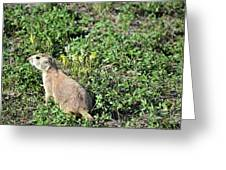 Nebraska Prairie Dog Greeting Card