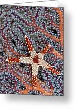 Necklace Seastar Greeting Card