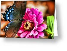 Nectar Feast Greeting Card