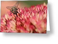 Nectar Hunt Greeting Card