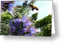 Nectar Landing Greeting Card