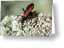 Nectar Lover Greeting Card