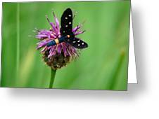 Nectar Time Greeting Card