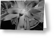 Negative Bromeliad Greeting Card