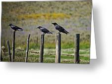 Neighborhood Watch Crows Greeting Card