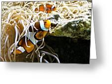 Nemo And Marlin Greeting Card