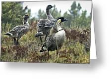 Nene Geese Greeting Card