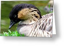 Nene Hawaii State Bird Greeting Card