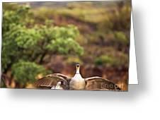Maui Hawaii Haleakala National Park Nene Hawaiian State Bird Greeting Card