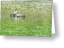Nene On Green Pond Greeting Card