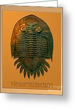 Neometacanthus Fossil Trilobite Greeting Card