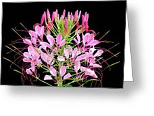 Neon Cleome Greeting Card