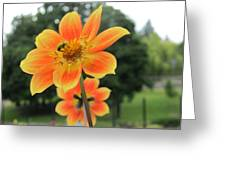 Neon Orange Flower Greeting Card