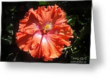 Neon-red Hibiscus 6-17 Greeting Card