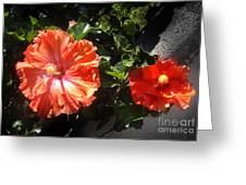 Neon-red Hibiscus Flowers 6-17 Greeting Card