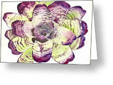 Neoregelia 'freeman's Vision' Greeting Card by Penrith Goff