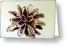 Neoregelia Painted Delight Greeting Card by Penrith Goff