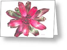 Neoregelia Puppy Love Greeting Card by Penrith Goff
