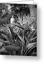 Nepenthe Bird Of Paradise B And W Greeting Card
