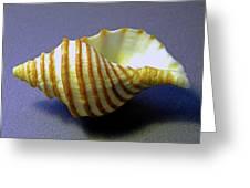 Neptune Whelk Seashell Greeting Card