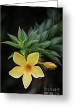 Nerium Oleander In The Rain Greeting Card
