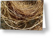 Nest 913 Greeting Card