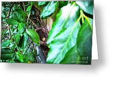 Nest In Plain Sight Greeting Card
